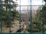 Zoo Rallye (87).JPG